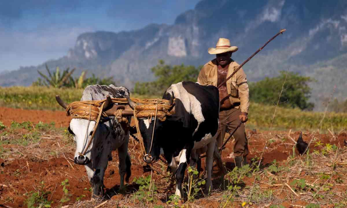 Cuban farmer in Vinales (Dreamstime)