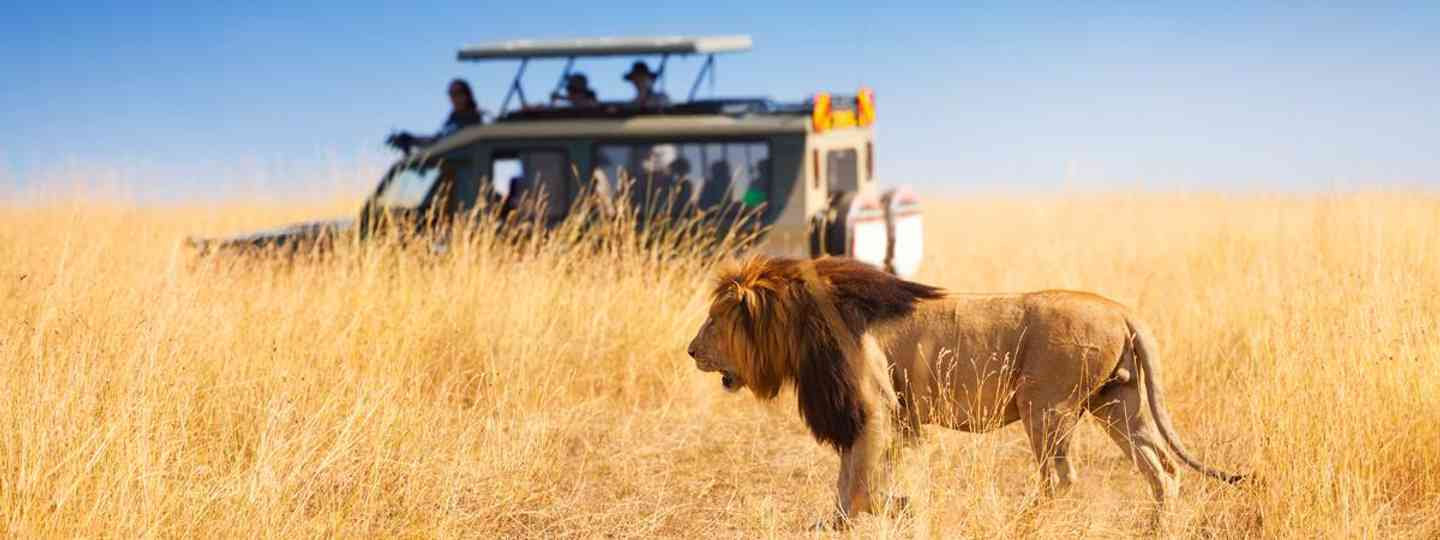 Lions and a chance to see the big 5 are a big draw to safaris