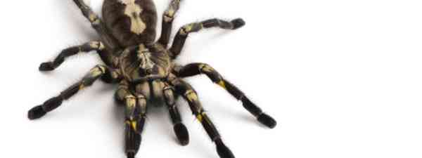 Fear of spiders can be constraining and debilitating (Dreamstime)