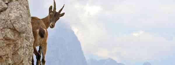 Catch me if you can (Montasio massif, Friuli-Venezia Giulia, Italy) by Stefano Zocca