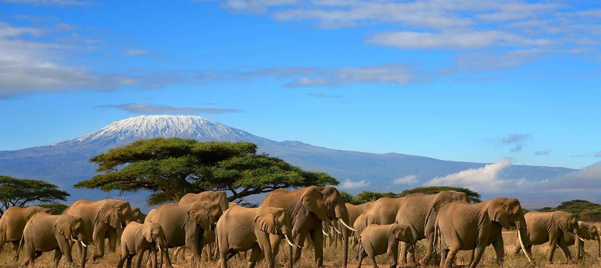 Kilimanjaro (Sarah Baxter)