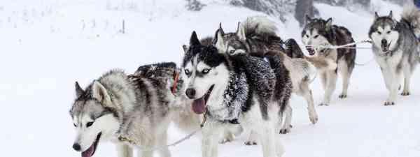 Husky sledding(finnmark tourist board)