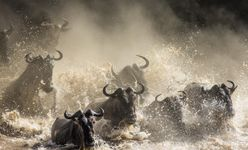 The Great Migration, Serengeti, Tanzania