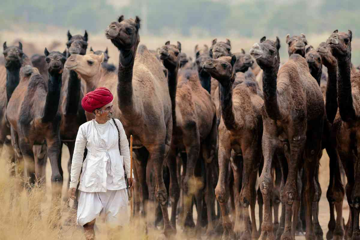 Pushkar Camel herder (Khairel Anuar Che Ani)