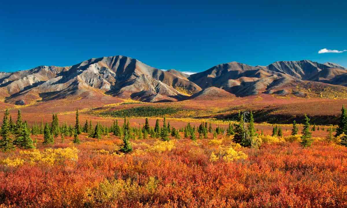 Denali National Park (Shutterstock.com)