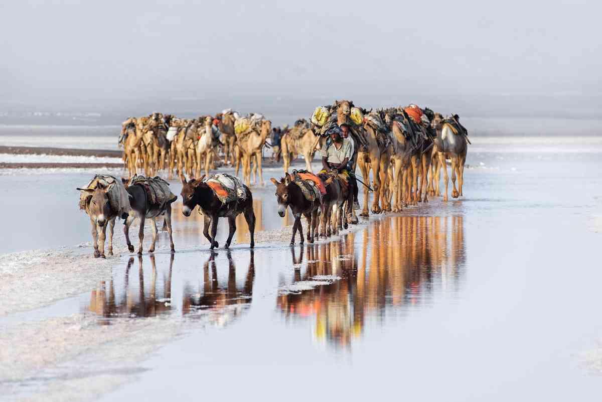 Danakil Desert, Ethiopia (Trevor Cole)