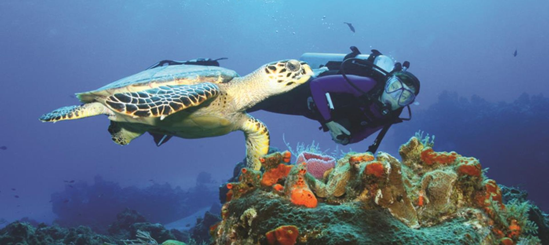 Diving and snorkelling immerses you into a floaty, contemplative world (Hank Plank)