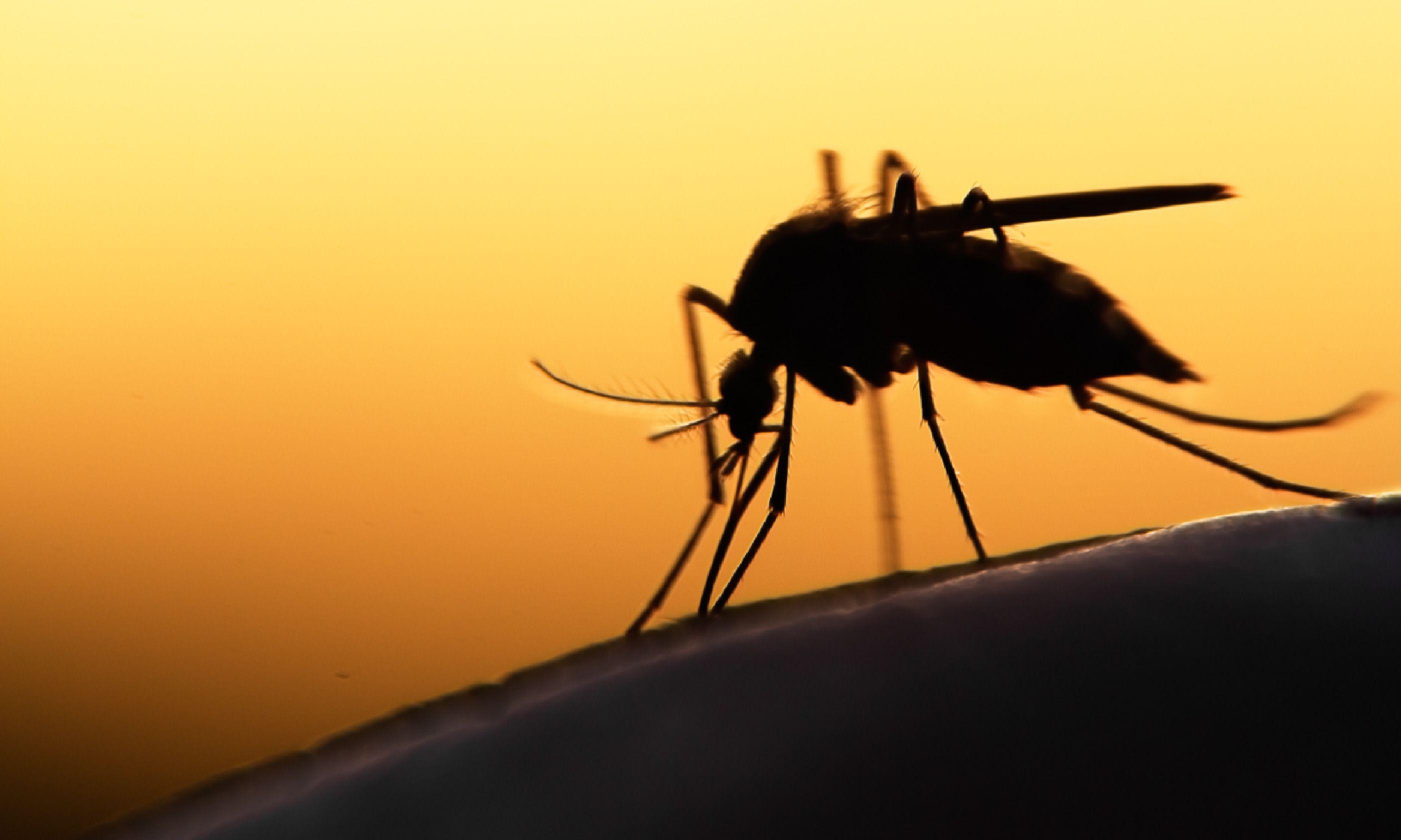 Mosquito on skin (Shutterstock)