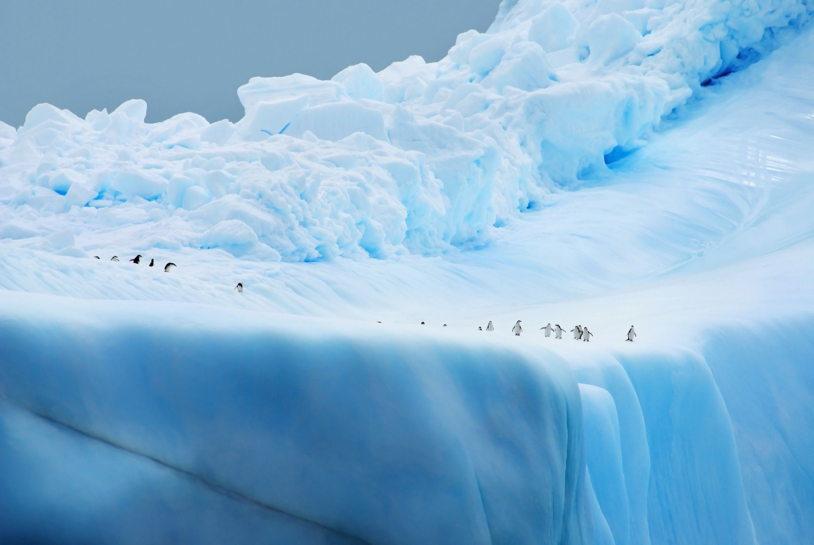 Gerlache Strait, Antarctica (Christian Wilkinson)