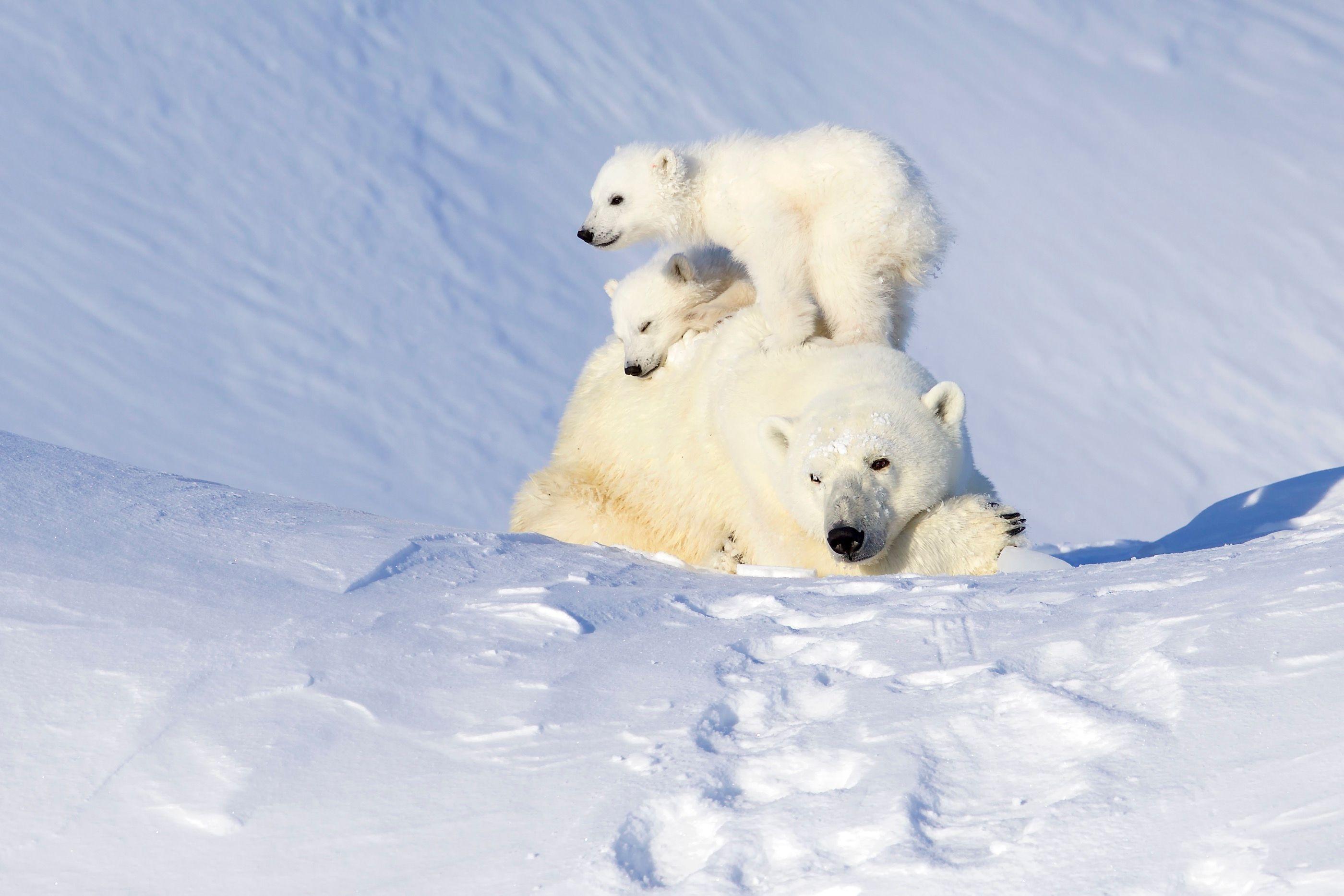 Baffin Island (Andy Skillen)