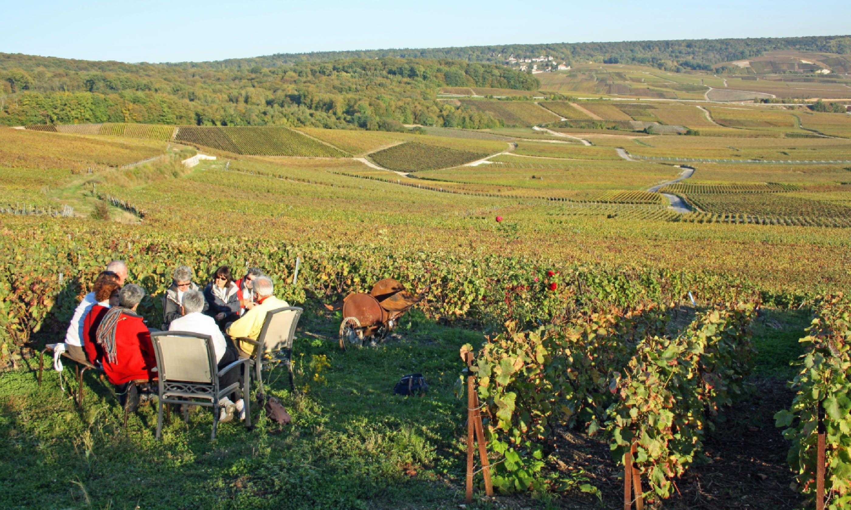 Vineyard wine tasting in Champagne (Dreamstime)