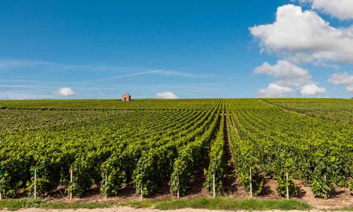 Champagne region (Shutterstock)