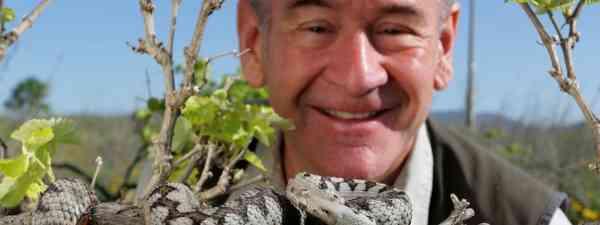 Nigel meest a nose-horned viper (Caroline Tout)