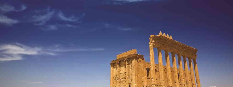 Camel at Palmyra, Syria