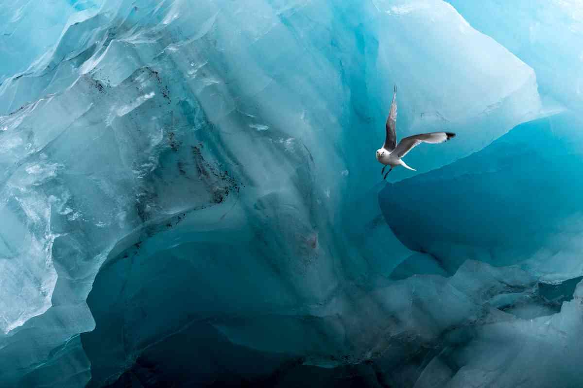 (Icy look (Renato Granieri)