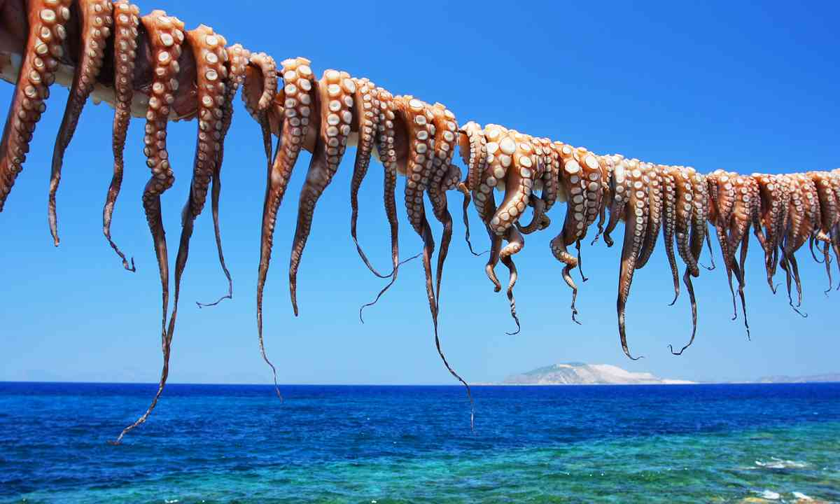 Octopus drying on Nisyros (Shutterstock.com)