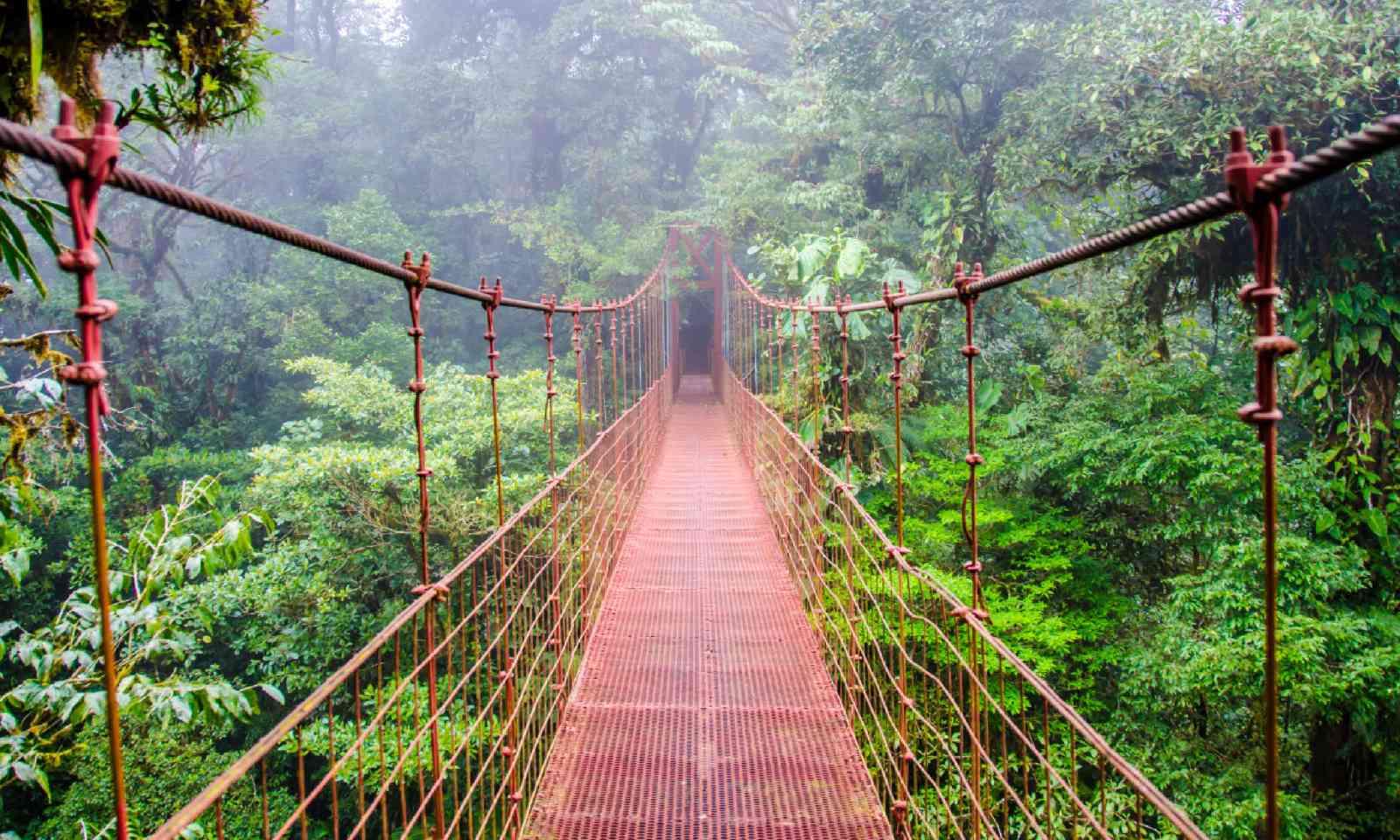 Bridge in rainforest, Costa Rica (Shutterstock)