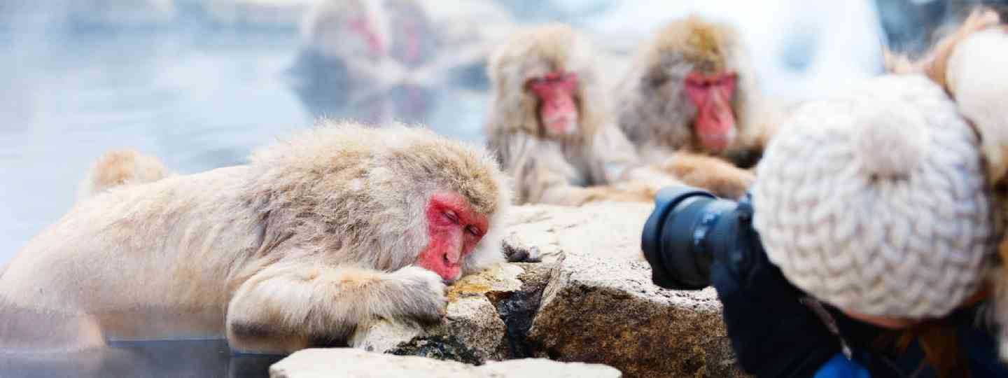 Photographing snow monkeys (Shutterstock)