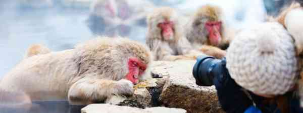 Photographing snow monkeys (Shutterstock)