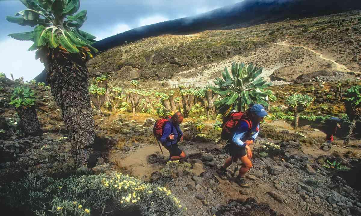 Climbers on Kilimanjaro (Dreamstime)