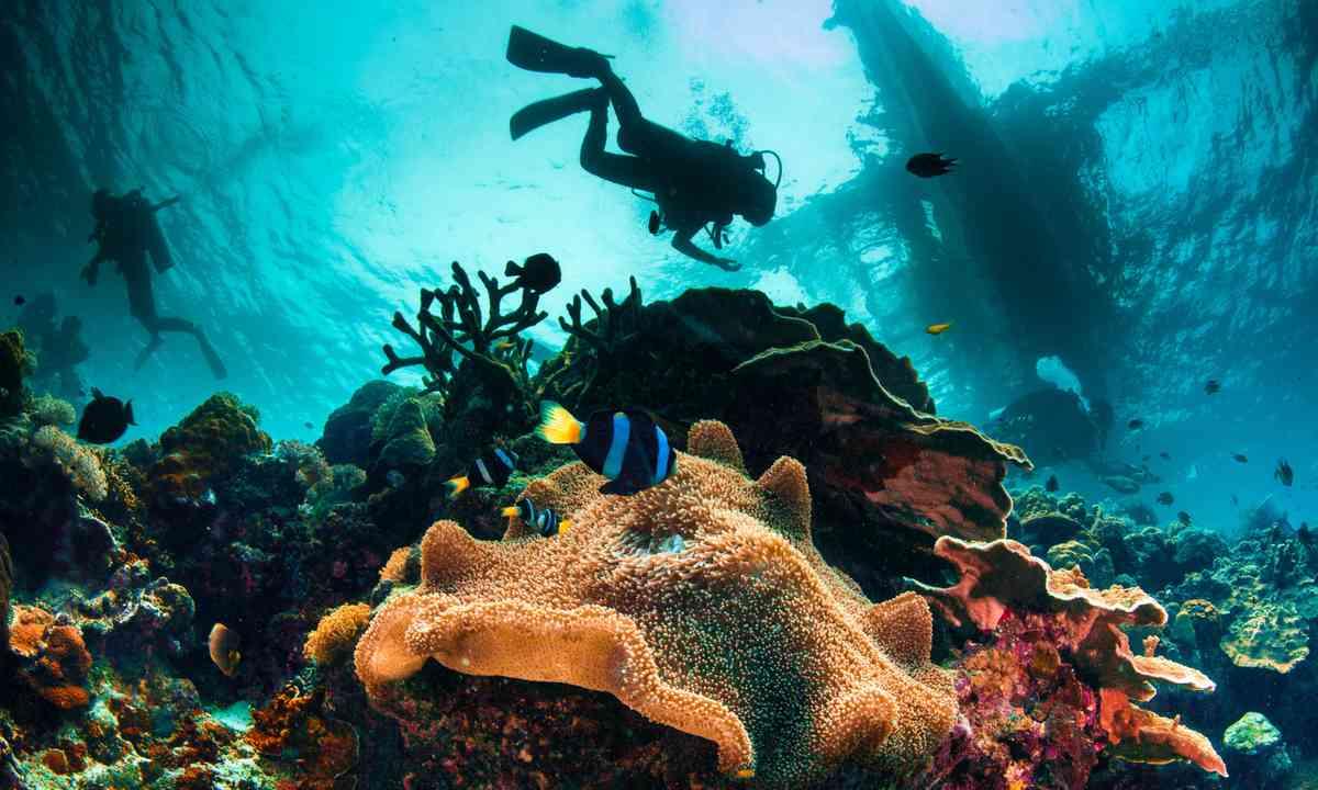 Diving in Cebu