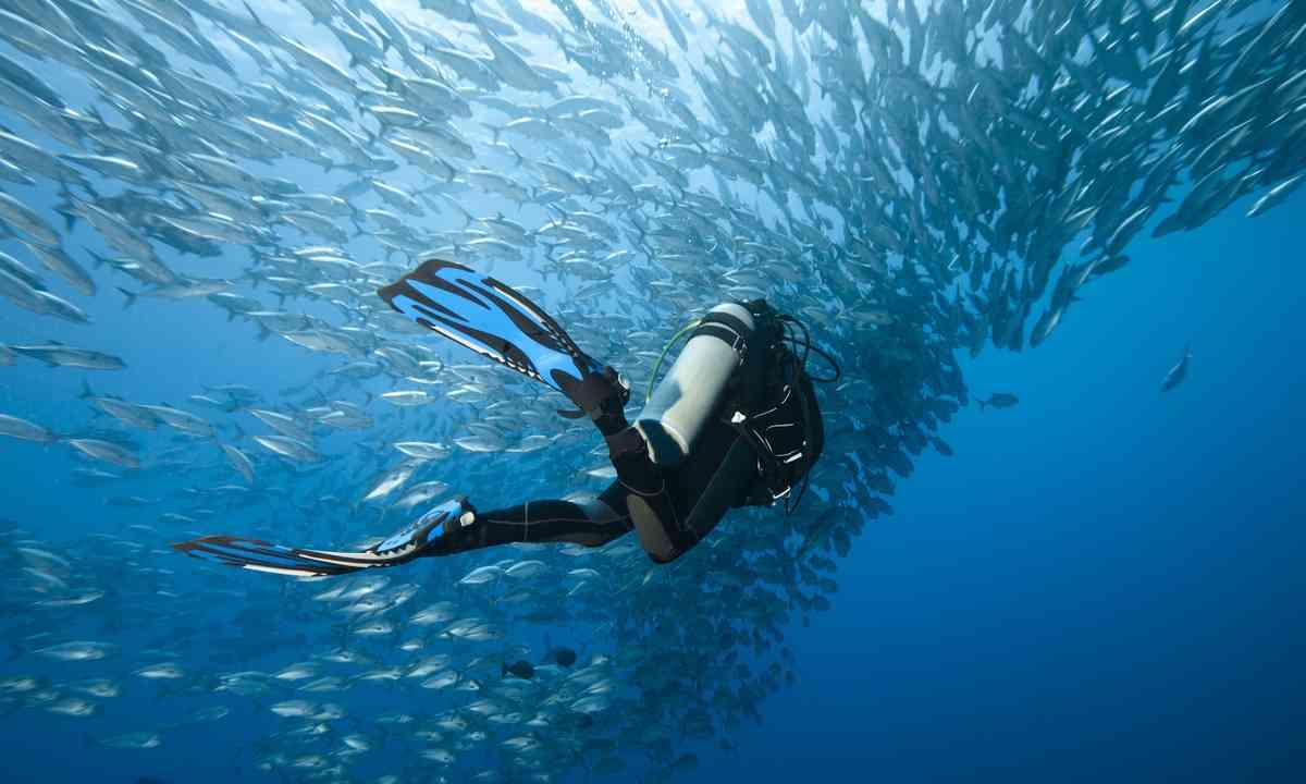 Diving amongst Trevally in Panglao (Shutterstock.com)