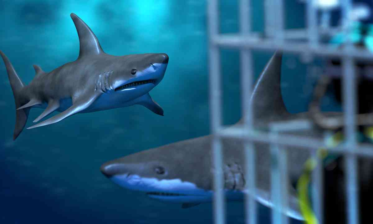 Cage diving with sharks (Dreamstime)