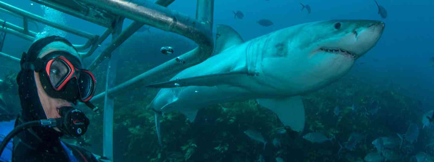 Cage diving with sharks (Sam Cahir/Dive Worldwide)