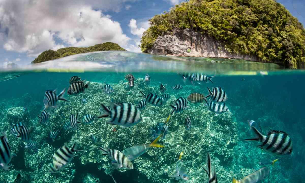 Damsel fish off Palau (Shutterstock.com)