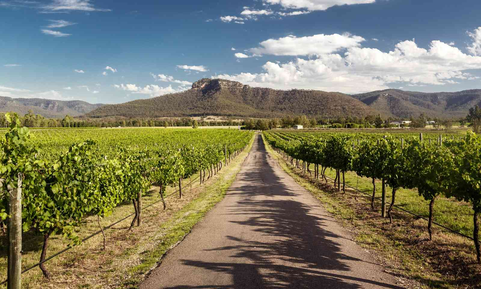 Road through a Hunter Valley vineyard (Dreamstime)