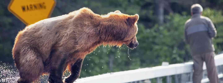 Brown bear (Shutterstock: see credit below)