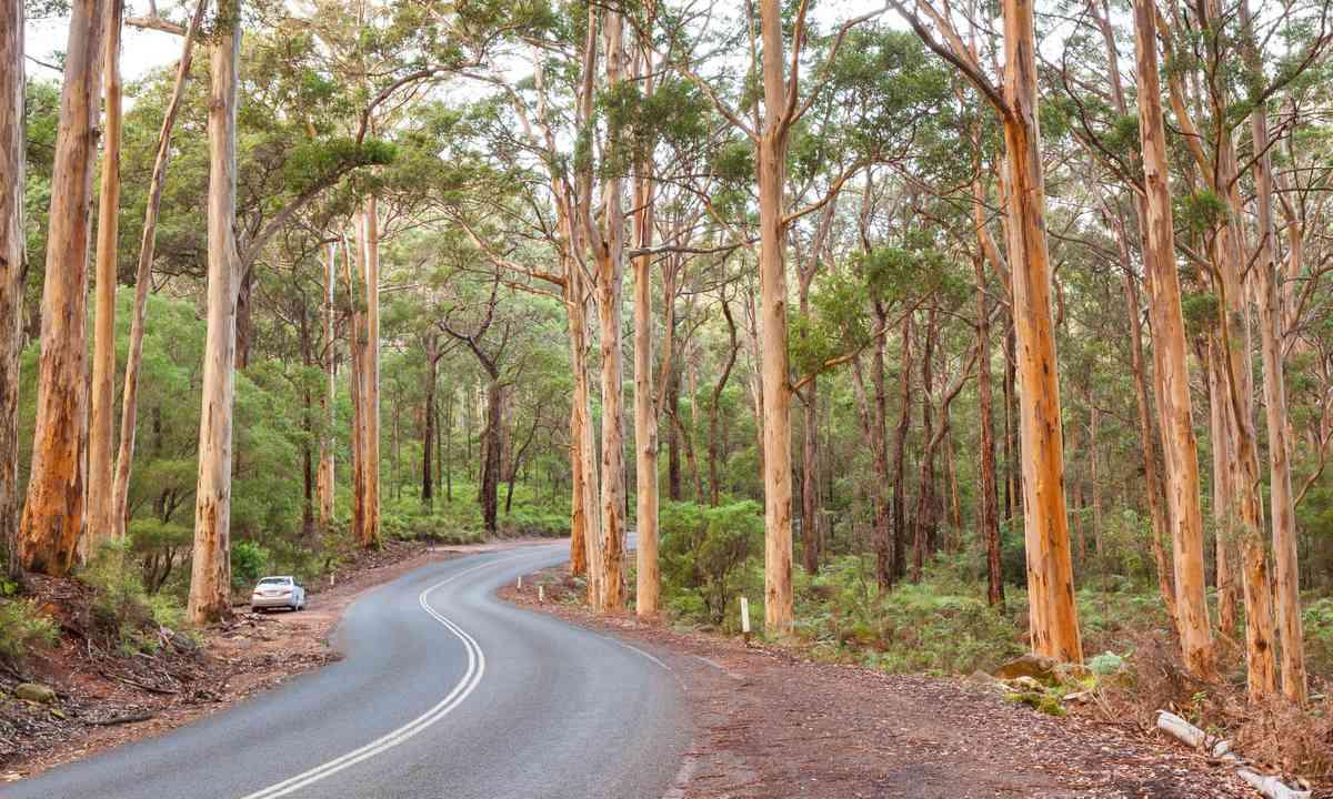 Boranup Karee Forest (Dreamstime)