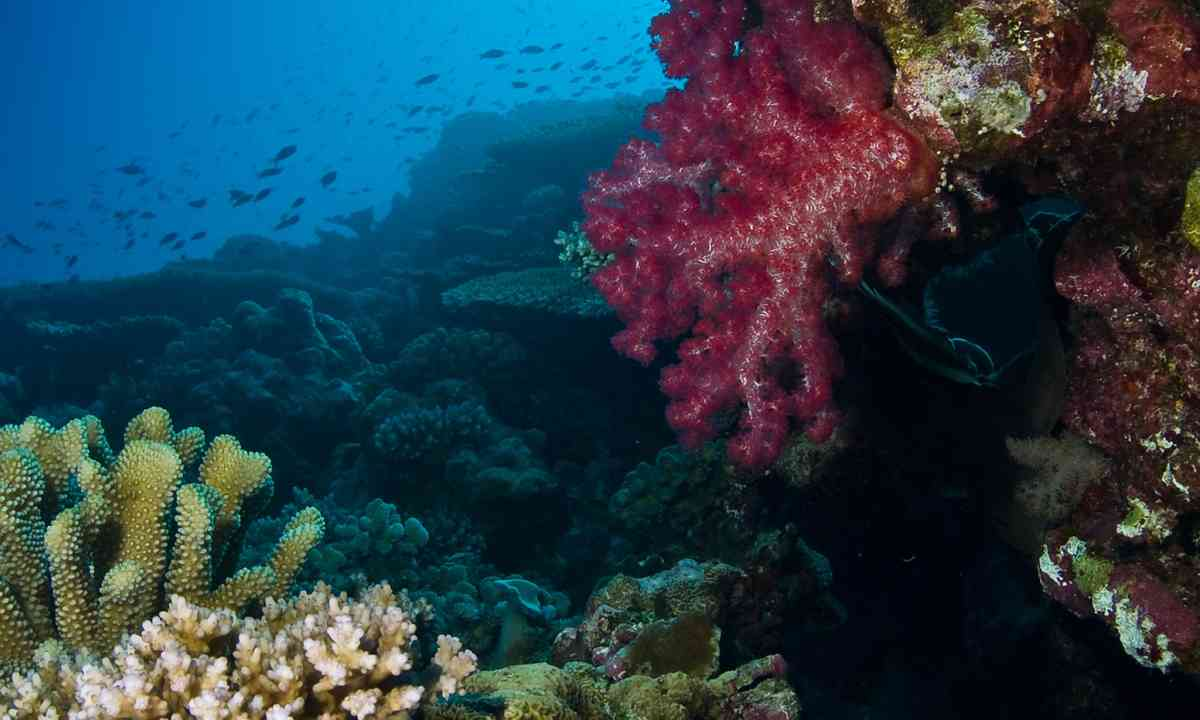 The reef at Rowley Shoals (Dreamstime)