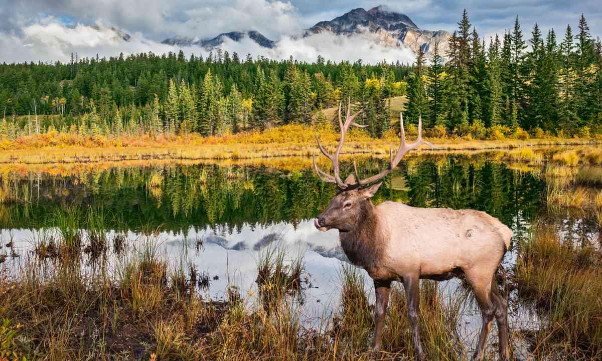 Jasper National Park (Shutterstock.com)