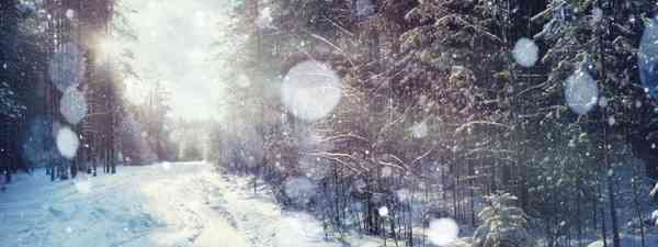 Winter forest (Shutterstock)