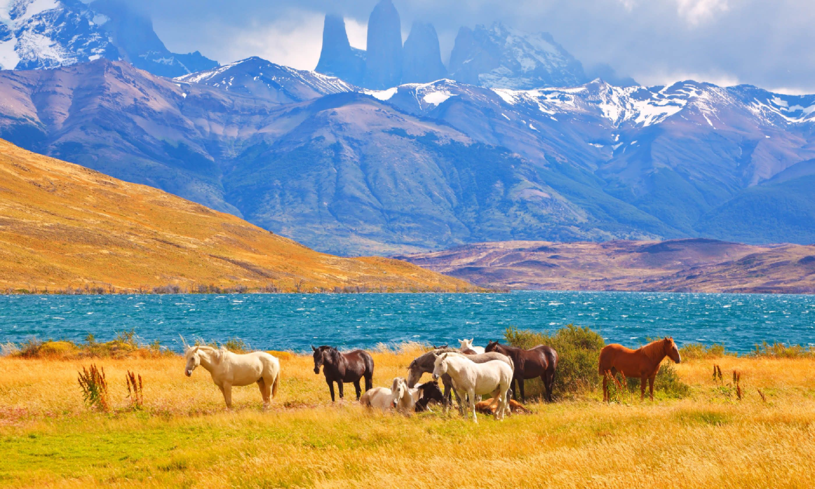 Horses grazing in meadow in Torres del Paine National Park (Shutterstock)
