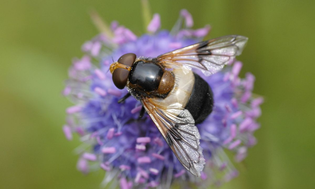 Photography tips: How to take great macro shots