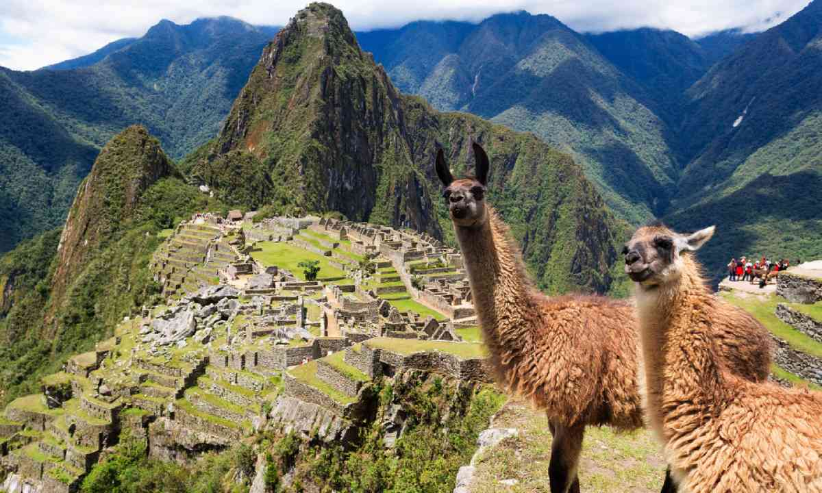 Llama at Lost City of Machu Picchu (Shutterstock)
