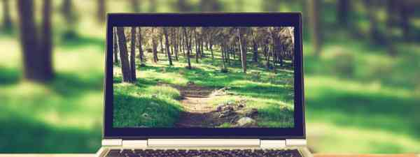 Laptop and trees (Shutterstock: see credit below)