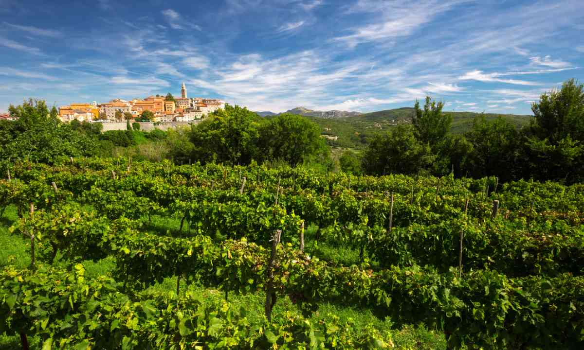 Old village with vineyard in Istria (Shutterstock)