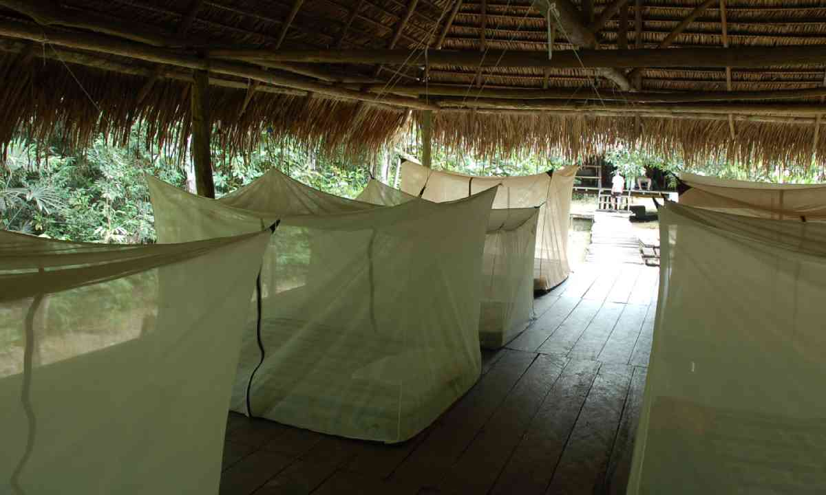 Mosquito nets in the Amazon (Shutterstock)
