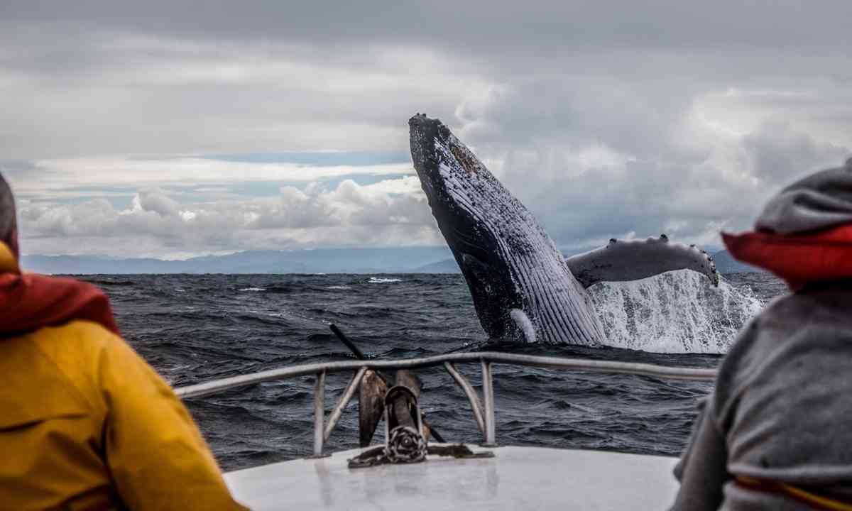 Whale surfaces near boat (Shutterstock.com)