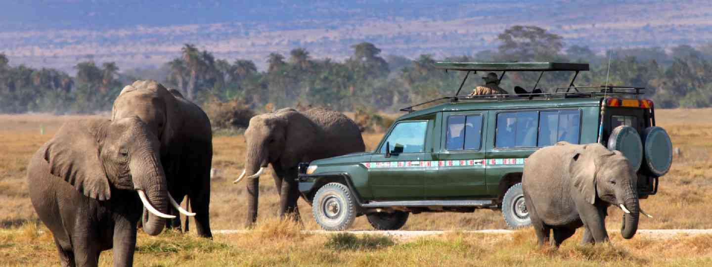 Safari game drive with elephants (Shutterstock: see credit below)