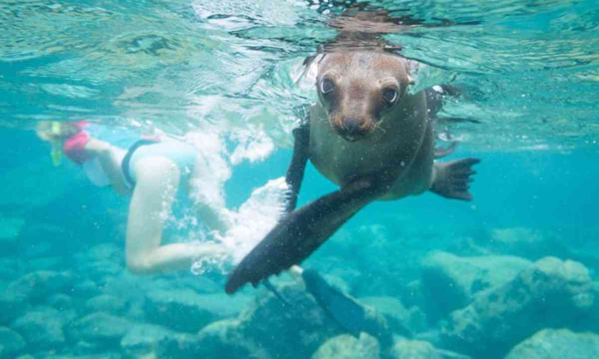 Sealions in teh Galapagos (Shutterstock.com)