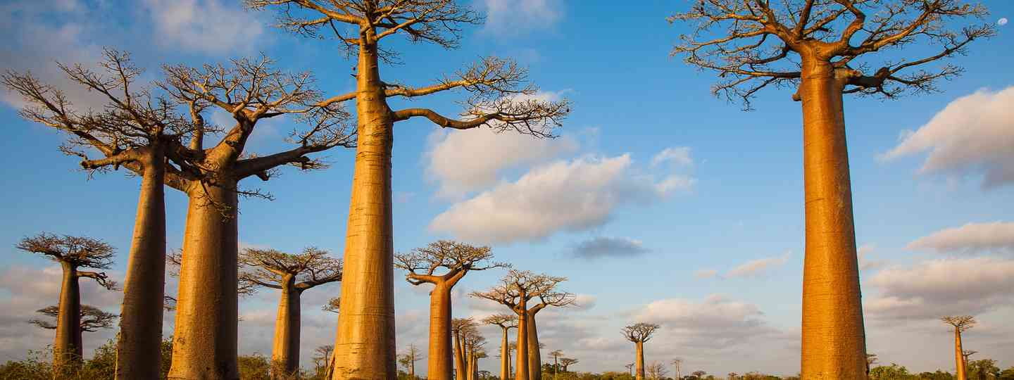 Baobab Alley, Madagascar (Shutterstock: see credit below)