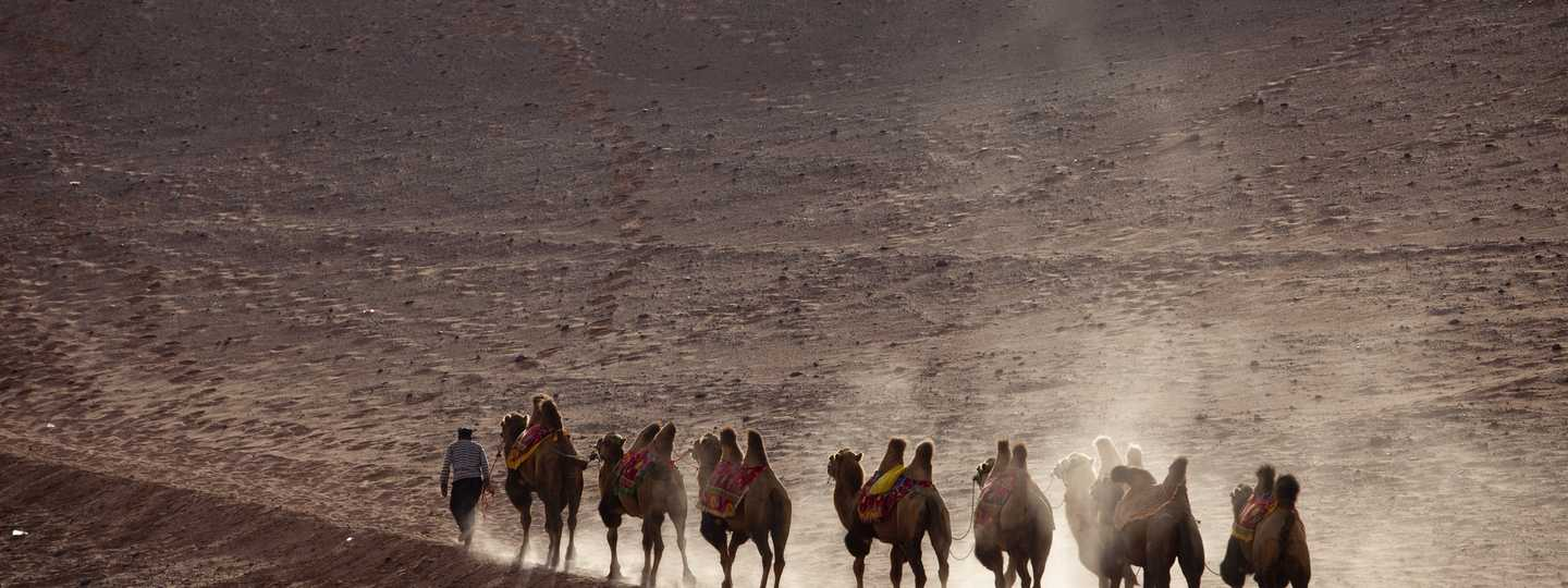 Camels on the Silk Road (Shutterstock: see main credit below)