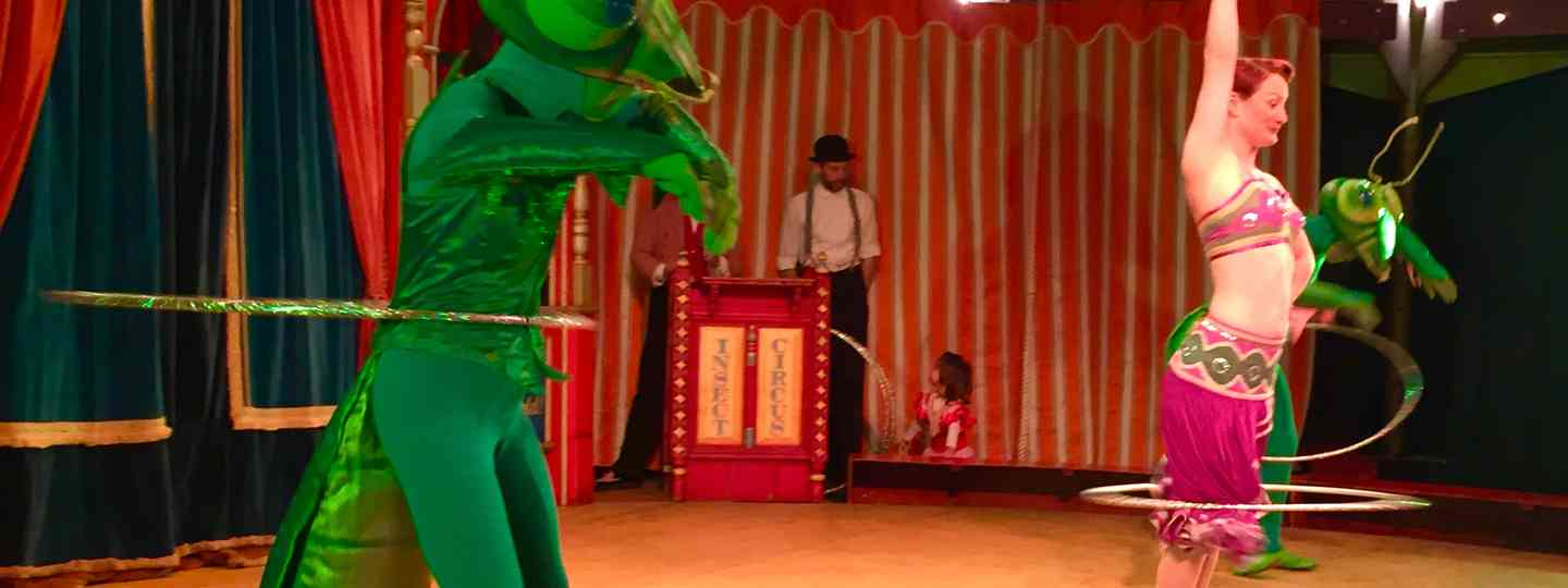 Insect circus (Peter Moore)