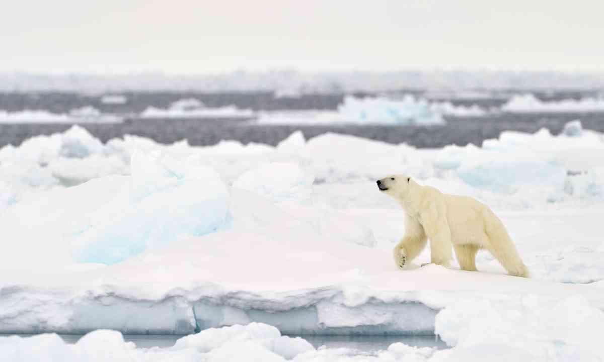 Polar bear on an ice floe in Baffin Bay (Dreamstime)