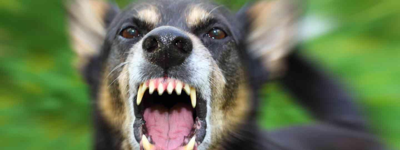 Enraged dog (Shutterstock: see credit below)