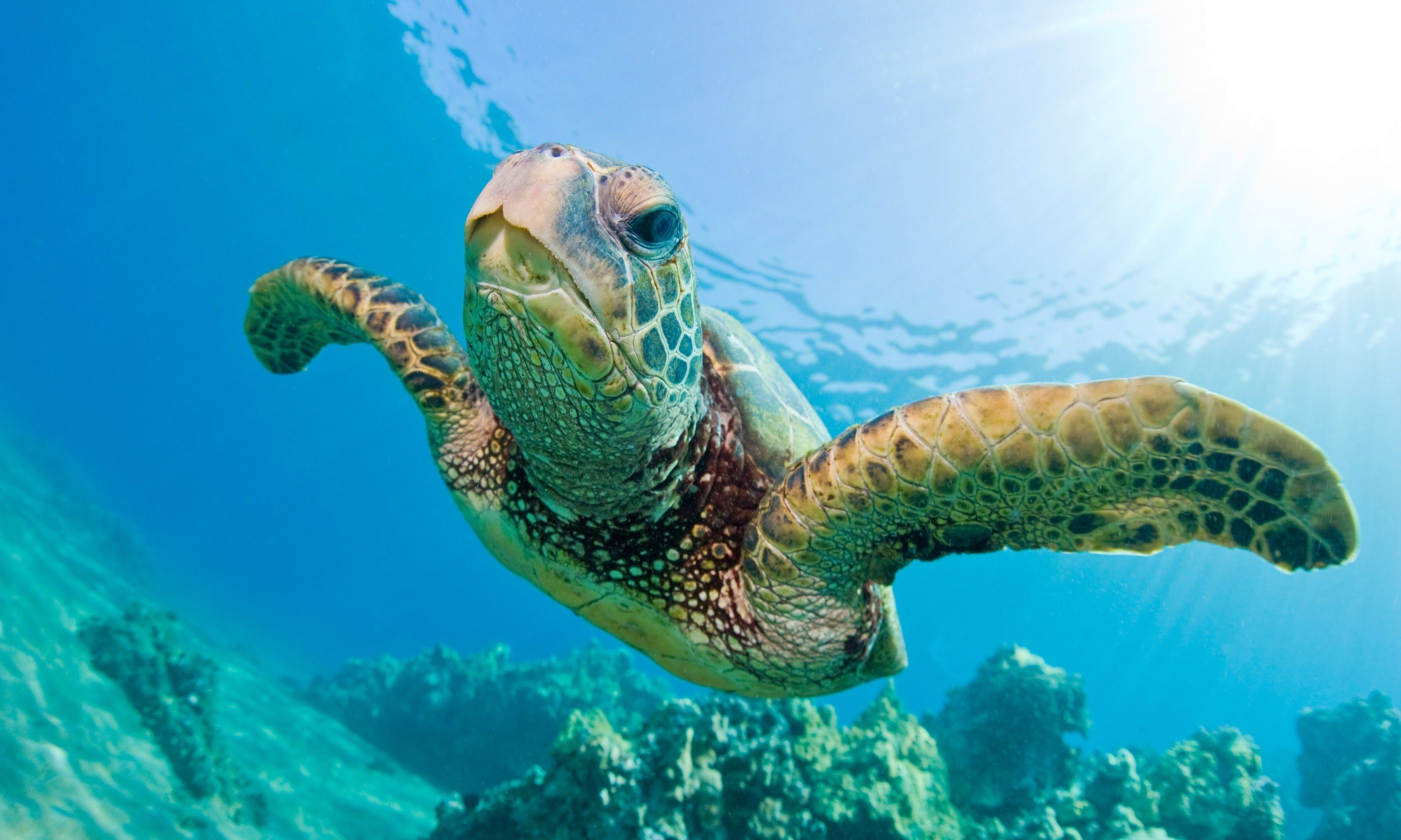 Sea turtle (Dreamstime)